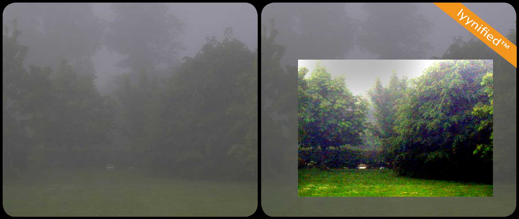foggy-garden-web