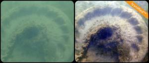 A mooring in turbid green water